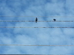 birds on and between wires against the sky of clouds